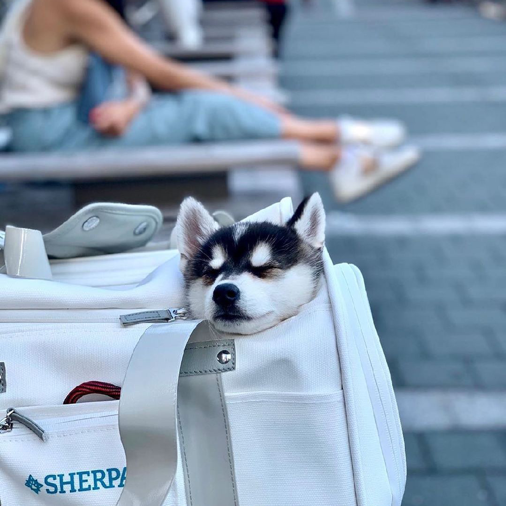 Sherpa Stay Clean Technology Pet Carrier White