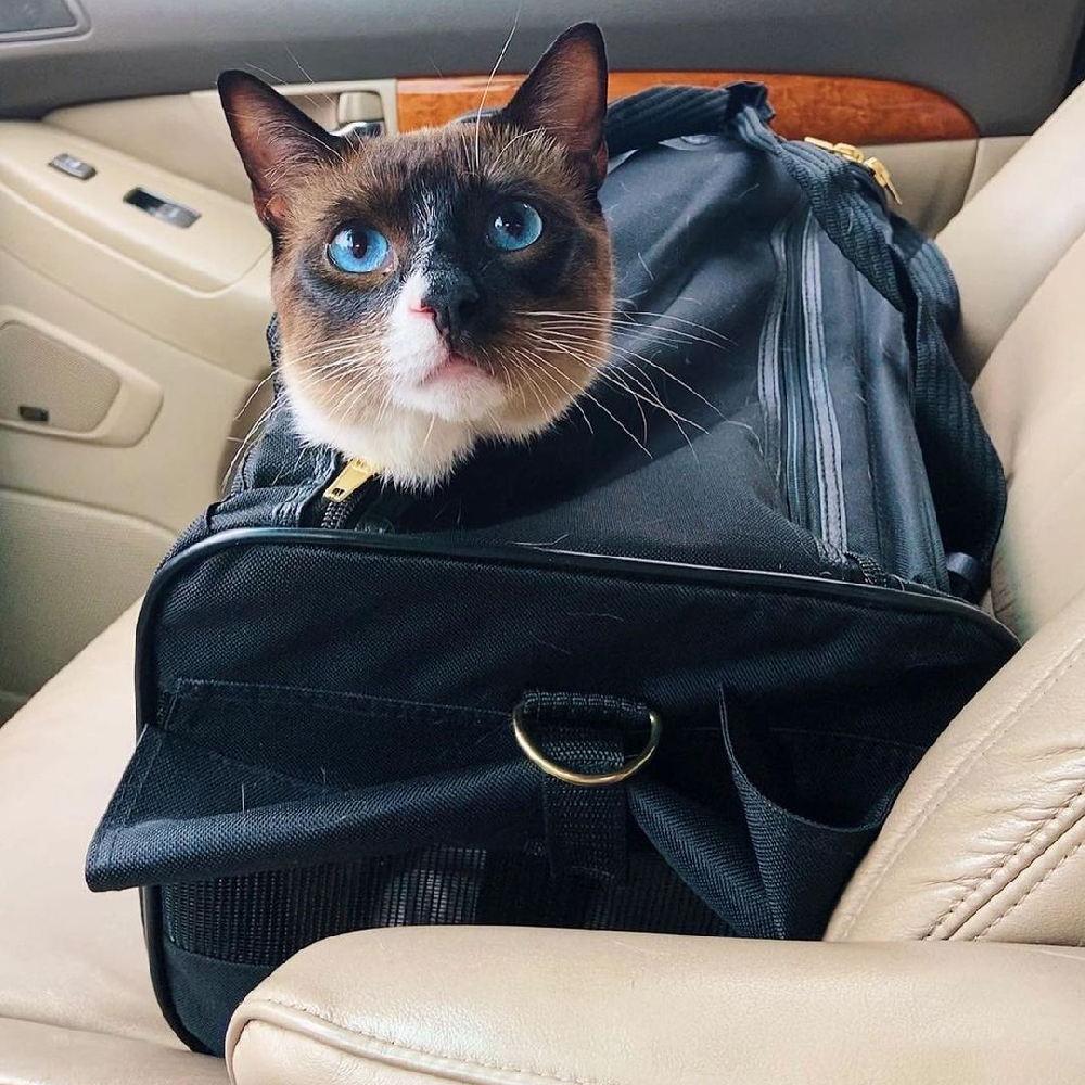 Sherpa Delta Pet Carrier with cat