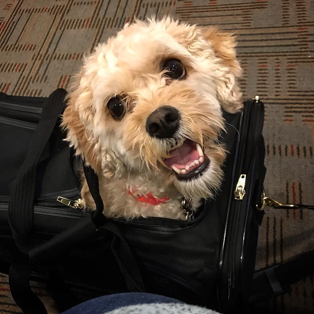 Sherpa Delta Pet Carrier with dog